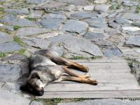 Никой не разбира защо има толкова много бездомни кучета у нас.